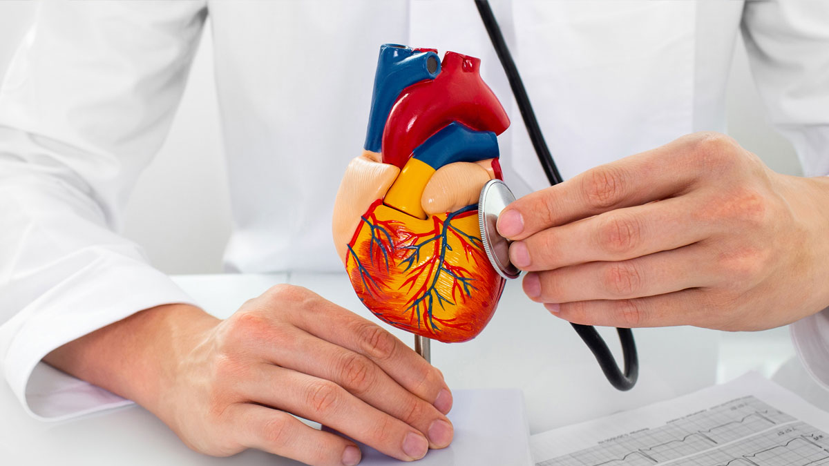 Doctor holding model of heart with stethoscope